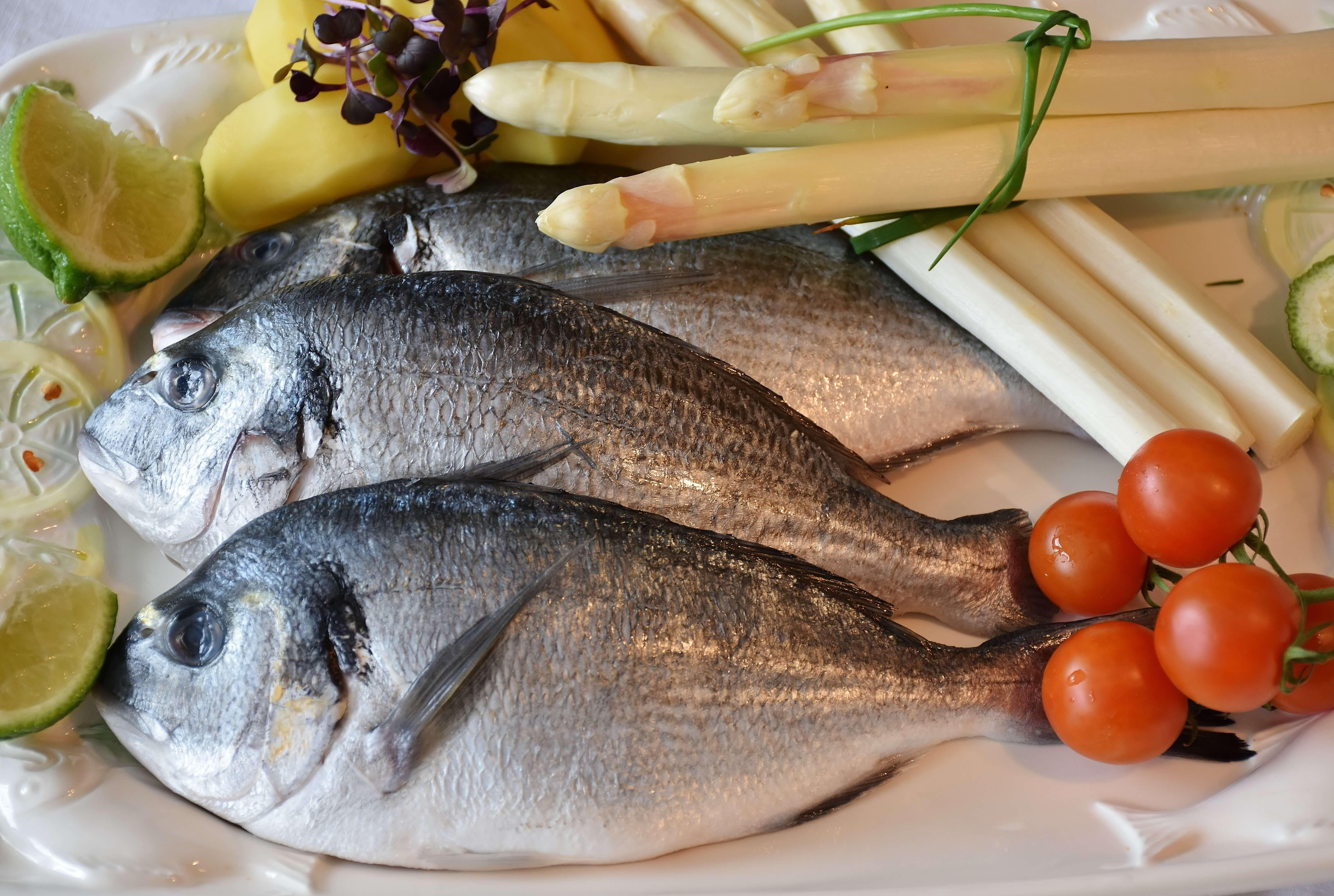 fish-2230852(1)